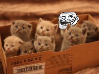 kitten-troll-890x593
