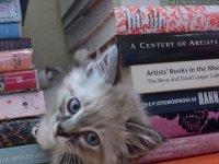 27-cica-akik-imádnak-a-könyvek-között-játszani23