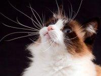macska_bajusz5