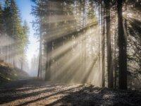sunbeam-1555249_960_720